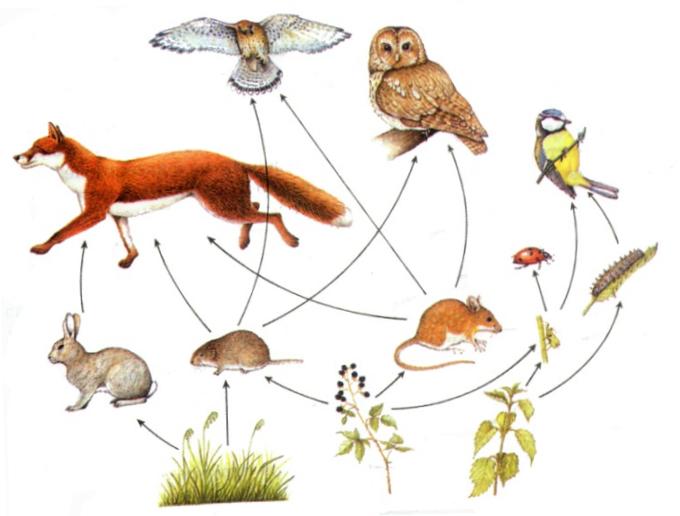 Кого едят животные схема
