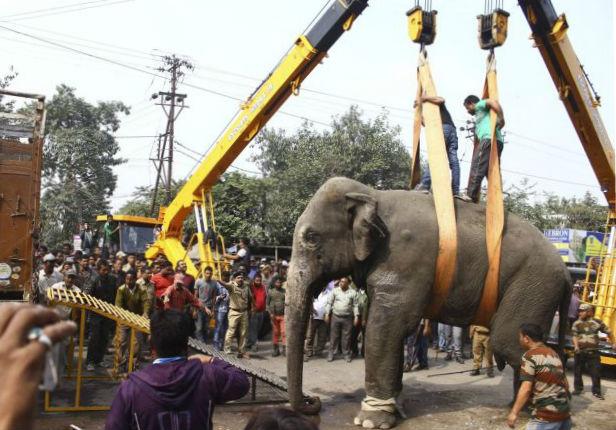 Дикий слон разрушал город в Индии